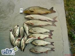 Mreza za kedere (sitnu ribu)