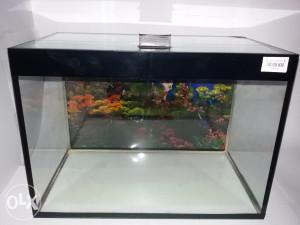 Akvarijum četverougli 42x25x29